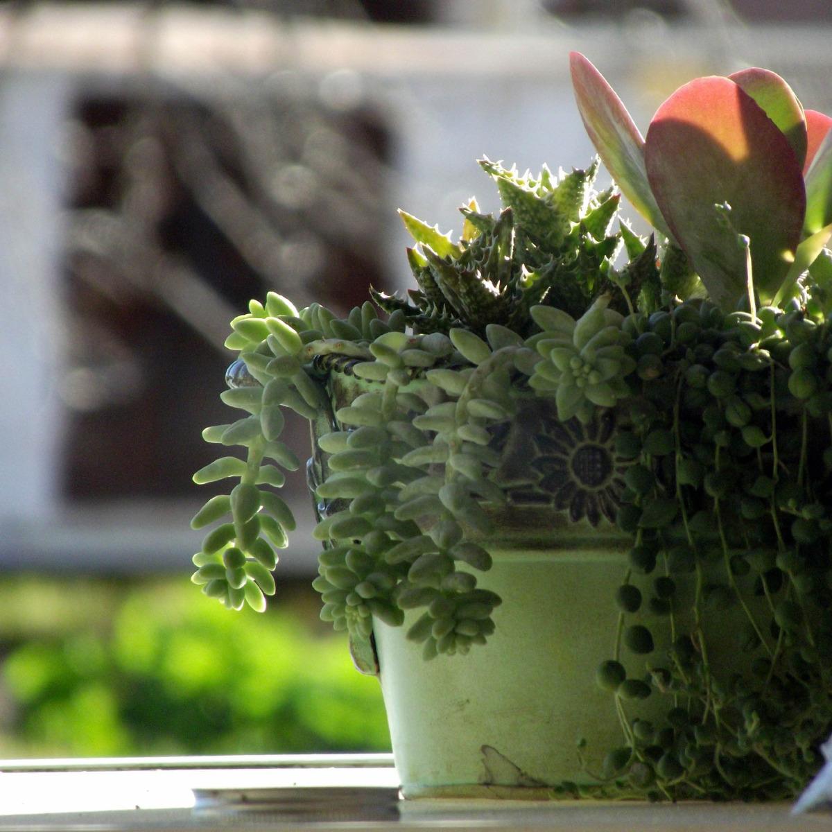 Slaapkamer planten gezond of juist niet?